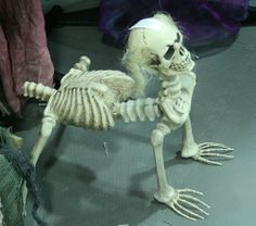 """Skeletal """"dog"""" Midwest Haunters Convention   #Halloween decor props"""
