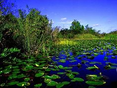 florida everglades | ... Florida Coastal Everglades (FCE) Long Term Ecological Research (LTER