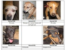Big Spring, TX Animal Shelter All these pups are in need of rescue! If you are interested in adopting please Contact Us @ 432.816.5756 Rescue Group & Lost N Found Pets of Howard County. At the City pound. Call Amber at (432) 264-2372 to adopt directly from Shelter. #36 Euthanized :(