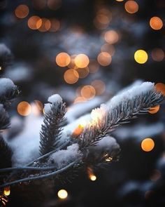 Lights are simply part of Christmas time and winter time. In winter or at Christmas time you can mak