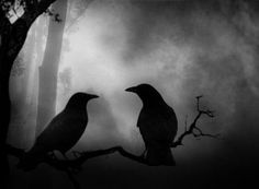 Beautiful birds. I think they are crows. The Incensewoman