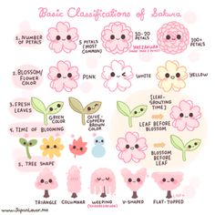 Classification of Sakura