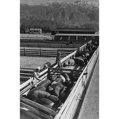 Buyenlarge 'Hog Farm' by Ansel Adams Photographic Print