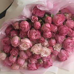 Luxury Flowers, My Flower, Beautiful Flowers, Flower Aesthetic, Pink Aesthetic, Pink Roses, Pink Flowers, Peonies, Planting Flowers