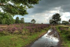 Photo listed in Landscape Shot taken with Canon EOS 2 shares and 6 likes. Canon Eos, Holland, Rain, Country Roads, The Netherlands, Netherlands, Waterfall