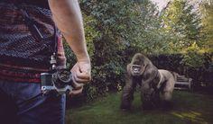 Camera Vs Gorilla
