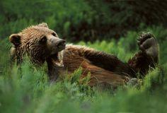 [bear, surprised?]