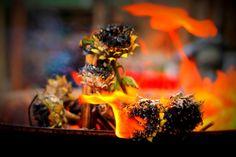 Public Domain Fire Pictures – PublicDomainBox.com :http://www.publicdomainbox.com/public-domain-fire-pictures-publicdomainbox-com/