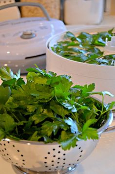 Drying Fresh Parsley in a Dehydrator - Home in the Finger Lakes