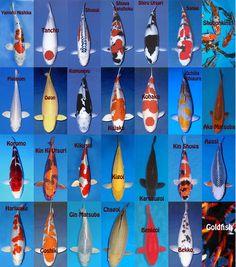 1000 images about koi on pinterest japanese koi carp for Koi variety chart