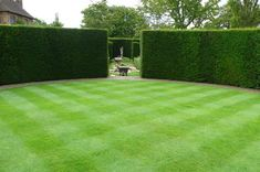 Renew With Yew: The Easiest (and Hardiest) Hedge for Your Garden Gardenista