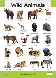 Wild-Animals-Hi-Res-copy - Wild-Animals. - Wild-Animals-Hi-Res-copy – Wild-Animals… – Wild-Animals-Hi-Res-copy – Wild-Animals-Hi-Re - Printable Animal Pictures, Animal Pictures For Kids, Wild Animals Pictures, Printable Animals, Animals Images, Animal Kids Name, Animals For Kids, Jungle Animals, Farm Animals
