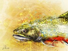Splash Series - Brook Trout I