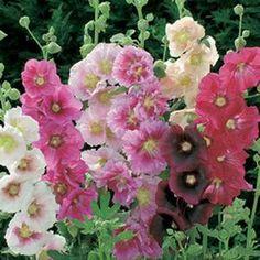 full sun flowers and plants, full sun gardens, water drought plants, sun tolerant plants, flowers attract butterflies