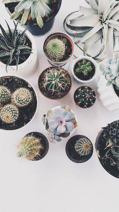 pinterest || hollywallace14