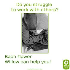 Do you struggle to work with others? #Willow #BachFlowerRemedies