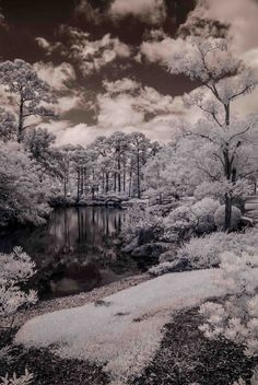 A T E L I E R 1 0 2 2: Archive - Ellie Perla - South Florida Infrared Photography