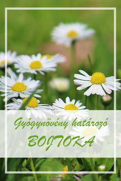A Százszorszép népies neve:  Tavaszfű, pászkamorzsa, rukerc, boglár, bojtoka, perevirág.  Hogyan gyűjtsük a Százszorszép gyógynövényt?  Virágzatát, hasznosítják gyógyászati célokra. Kora tavasztól nyílik. A növény kinyílt virágzatát 1 cm hosszú kocsányrésszel gyűjtik.