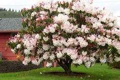 #flowertree