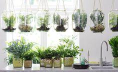 Mit ihren filigranen, frischgrünen Wedeln verleihen Zimmerfarne jeder Wohnung das gewisse Etwas. Bühne frei für die fünf schönsten Farne für Ihr Zuhause!