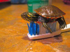 turtle planking ;)