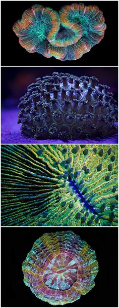 'Coral Colors' time-lapse short film showcases the psychedelic beauty of marine invertebrates.