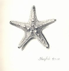 starfish drawing - Google Search