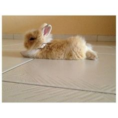 alright somebody just really needs to buy me a bunny.