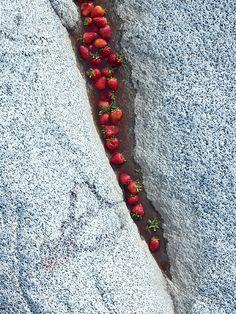 Strawberries & Algae