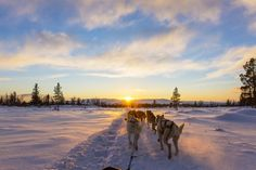 Have you ever gone dog sledding? Now's your chance to do so... For free! Sign up for a trip to Québec the Prométour way: http://www.prometour.com/wp-portal/studenttravelambassador/