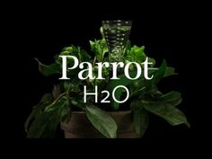 #CES 2015 : Flower Power H2O, the smart sensor that waters your plant when you are away. | Parrot news