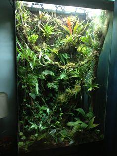 Great vertical space for arboreal frogs Vivaria Tree Frog Terrarium, Gecko Terrarium, Planted Aquarium, Crested Gecko Vivarium, Reptile Room, Reptile Cage, Frog Tank, Vertikal Garden, Whites Tree Frog