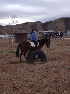 10 steps to success with a new horse-good tips for ANY new horse you bring in
