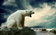 Angry polar bear Photo: Fan Pop