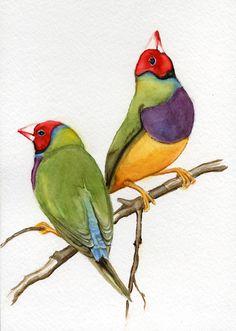 EarthspaletteEarths   WATERCOLOR   Finch