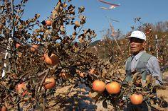 말라 죽은 나무, 말라 죽어가는 노동자들