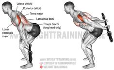 The bent-over barbell reverse raise is a rare exercise but very effective at activating the posterior deltoid, the primary shoulder hyperextensor.