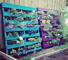 No one said you necessarily had to hang your hanging pallet garden. Notice that these pallets are perfectly substantial and are simply leaning against the wall. They're filled with lots of green plants and herbs with a few flowering varieties, but all of this stands out against the bright neon colors that are painted on the pallets.
