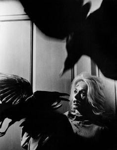 Les oiseaux (Alfred Hicthcock, 1962) Tippi Hedren