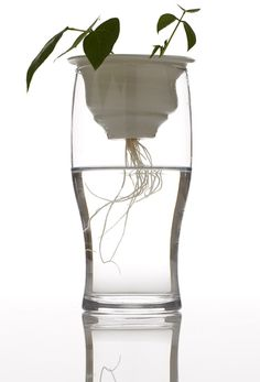 Plantation by Alicja Patanowska. Polish artist and designer Alicja Patanowska has created a collection of hand-thrown ceramic plant pots that fit inside old glasses so both stem and roots can be seen.