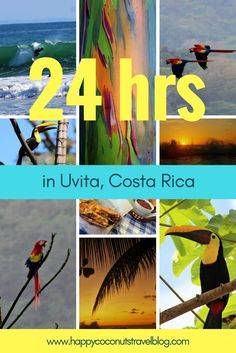 24 Hours in Uvita, Costa Rica |  Vacation in Costa Rica! |  Explore the Costa Ballena area |  Travel to Costa Rica! |  Scarlet macaws, toucans, Texas BBQ, rainbow eucalyptus trees, monkeys, surfers and sunsets!  Happy Coconuts Travel Blog |