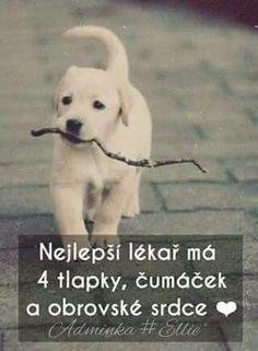 Pes ti dá do tváří ůsměv vždy když je nejhůř😢❤❤💘💘 Words Can Hurt, Cool Words, Dog Quotes Love, Best Quotes, I Love Dogs, Puppy Love, Cute Pupies, Jokes Quotes, Just Smile