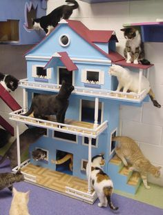 Kitty play house. Omgosh. I want this!!