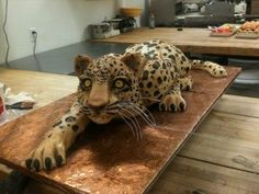 jungle cat cake