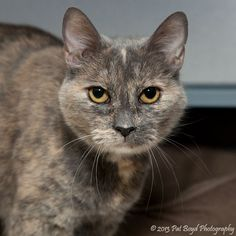 """Babs"" has been adopted!"