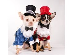 Anthony Rubio, who designed this look,  said he got into dog design when he made an outfit to warm his pet chihuahua, which was always shivering.