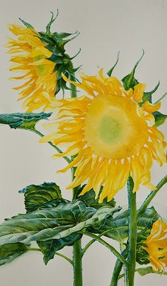 Watercolor demonstration of sunflowers by artist Lisa Hill Step 3