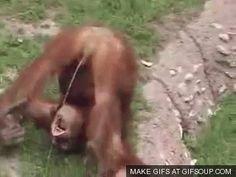 Tak się dzieje, gdy pracownicy zoo mają za dużo wolnego czasu - Joe Monster
