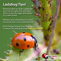 How To Attract Ladybugs To Your Garden   Pinterest   Ladybug, Gardens And  Garden Ideas