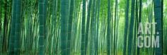 Bamboo Forest, Sagano, Kyoto, Japan Photographic Print by Panoramic Images at…